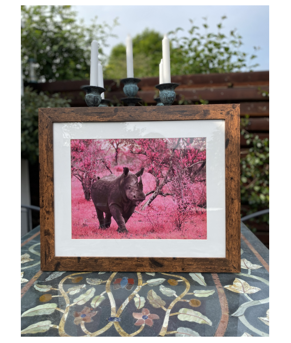 win-wildlife-photography-32360.png