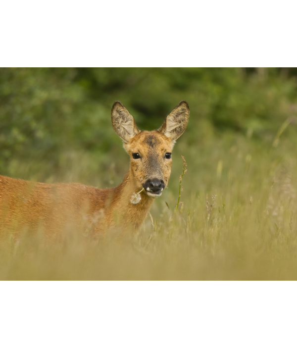 a4-wildlife-print-+-3-wildlife-card-122370.png