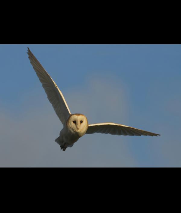a4-wildlife-print-+-3-wildlife-card-122372.png