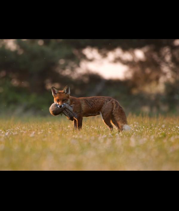 a4-wildlife-print-+-3-wildlife-card-122373.png