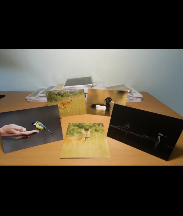 a4-wildlife-print-+-3-wildlife-card-122374.png