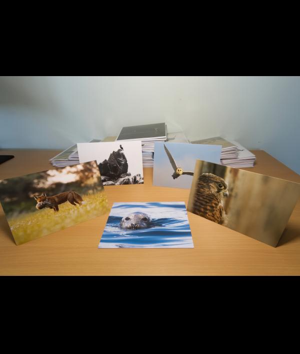 a4-wildlife-print-+-3-wildlife-card-122375.png