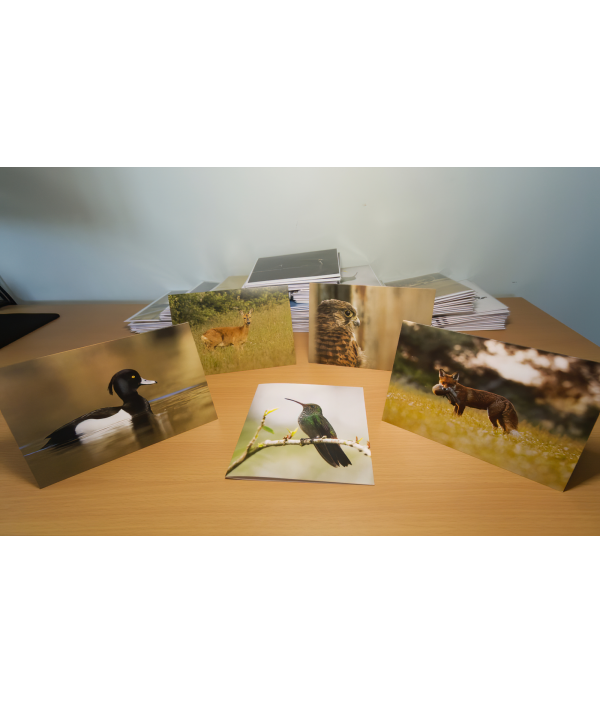 a4-wildlife-print-+-3-wildlife-card-122376.png