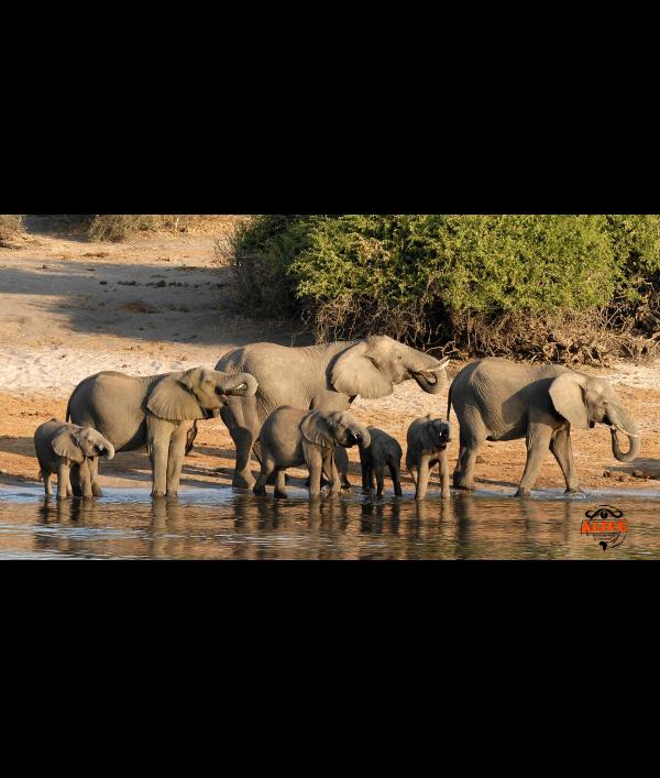 win-the-ultimate-safari-holiday-151015.png