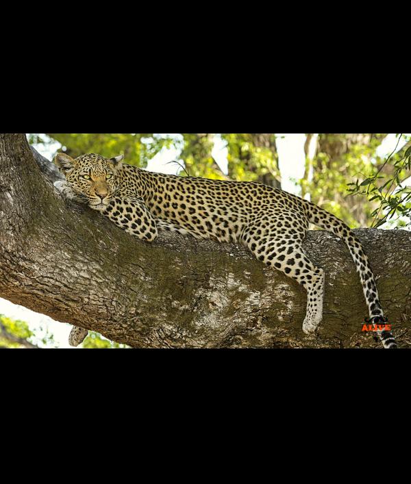 win-the-ultimate-safari-holiday-151016.png